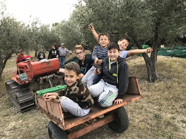 Raccolta delle olive Degustazione olio Umbria
