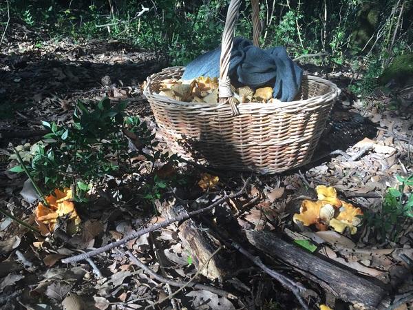 Raccolta funghi autunnale