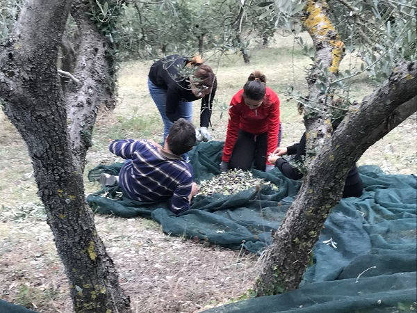 Degustazione olio Umbria - Raccolta olive olio dop umbria