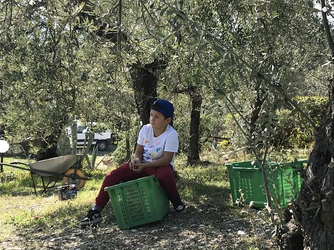 Degustazione olio Umbria - Raccolta olive spoleto